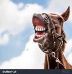 male horse.jpg