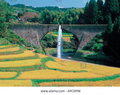 rice field kyushu.jpg